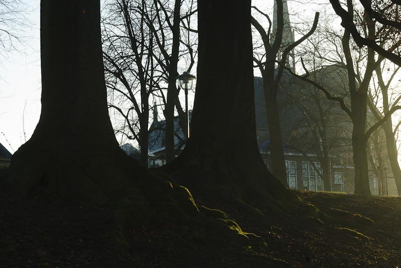 Boomwortels langs Sterrenburg