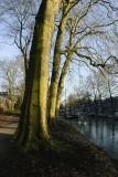 Bomenrij langs Manenburg
