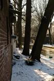 Bomenrij langs Nieuwegracht