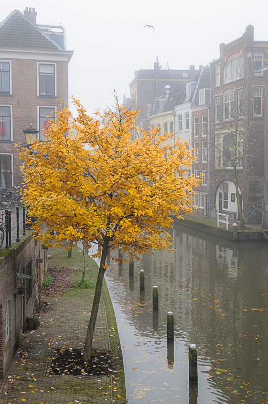 Herfst Oudegracht vanaf Maartensbrug