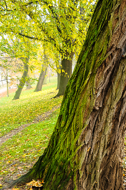 Herfst langs de Sterrenburg